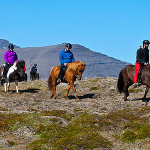 Horse tour in Westfjords