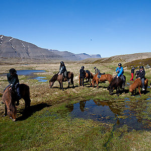 Horse trip in Iceland