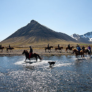 The Icelandic horse and dog