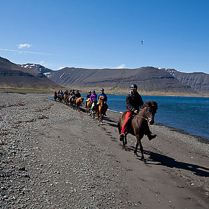 Westfjords horse riding