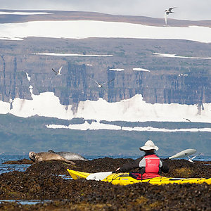 Seal Watching and Kayaking in Iceland