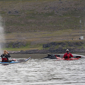 Whale Watching on Kayaks in Iceland