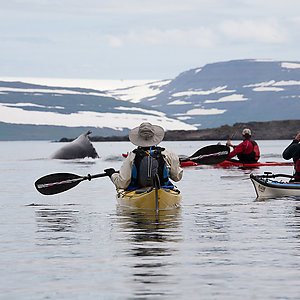 Sea Kayaking with whales in Westfjords Iceland