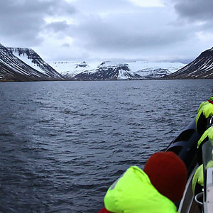Whale Watching in Westfjords Iceland