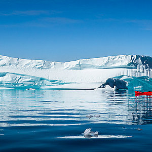Kayaking among the icebergs of East Greenland