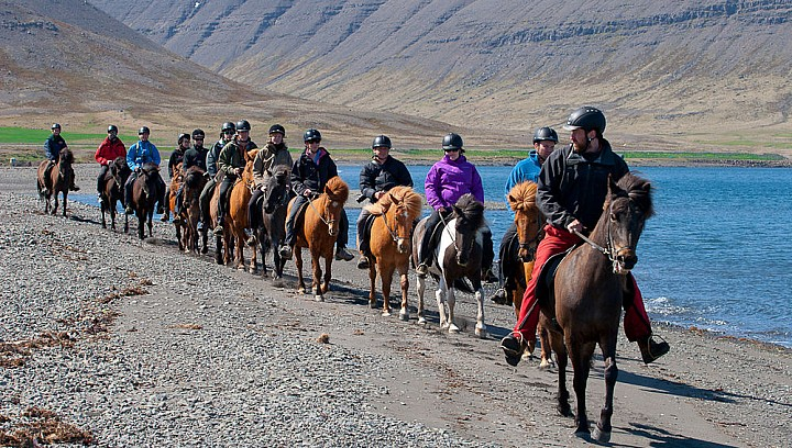 Horseback riding in Westfjord Iceland